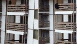 Aç ayı 3 katlı binaya tırmandı