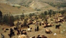 Hayvancılık destek başvuruları başladı