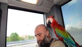 Bu papağan Allah diyor