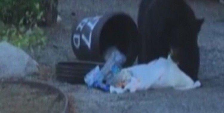 Aç kalan ayı çöpleri böyle karıştırdı
