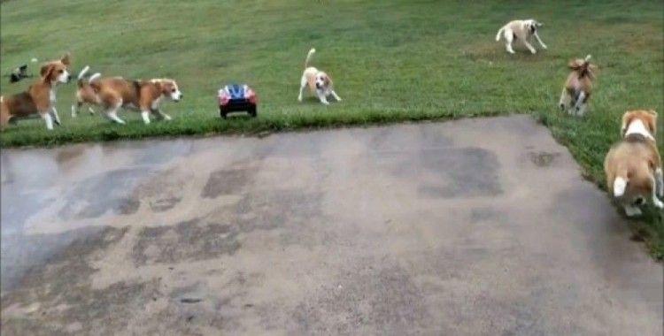 En sevdikleri oyun uzaktan kumandalı aracı kovalamak