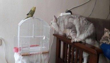 Kedi ile muhabbet kuşunun dostluğu düşman çatlatıyor