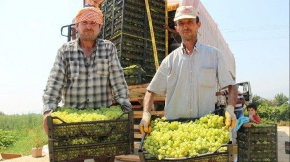 Türk üzümü 1 yıl sonra yeniden Rus pazarında