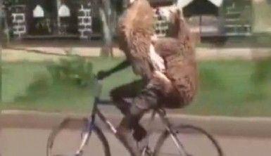 Gören bir daha baktı, bisikletle 2 kurbanlık taşıdı
