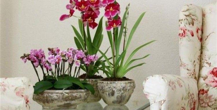 Çiçeklerle evinize hayat verin