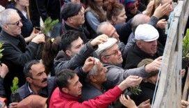 Samsun'da fidan izdihamı
