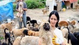 Sokak hayvanlarına aile şefkatiyle bakıyorlar