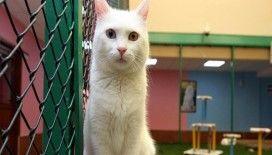Van kedilerine özel bakım