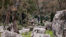 Ender türleri barından Termessos Milli Parkı ziyaretçilerini bekliyor