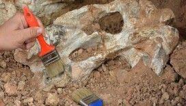 Denizli'de 9 milyon yıl öncesine ait 14 hayvan fosili bulundu