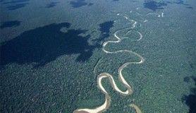 Amazon'da yaşayan tehlikeli hayvanlar