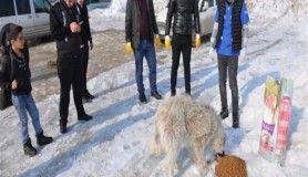 Yüksekova'da sokak hayvanları için yemleme çalışması