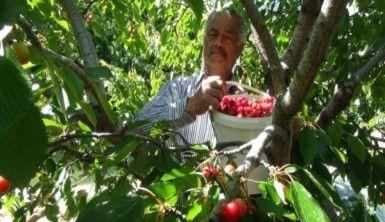 Antalya'da kiraz hasadı başladı