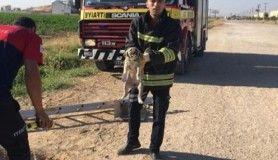 Yavru hayvanlar kurtarıldı