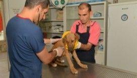 979 sokak hayvanın bakım ve tedavileri yapıldı