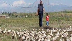 Pazardan aldığı tavukla çiftlik kurdu
