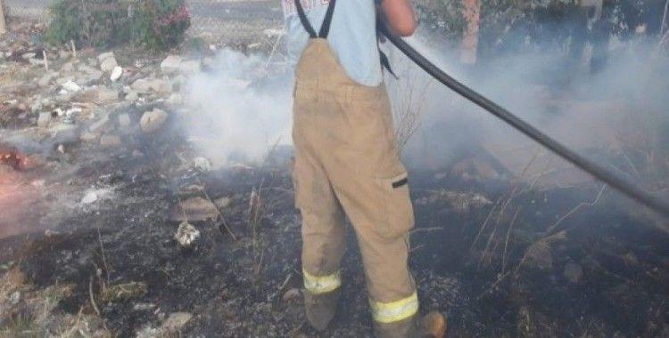 Burhaniye'de ot yangınlarında ağaçlar zarar gördü