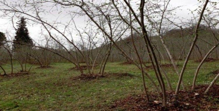 Fındık timleri sahaya iniyor