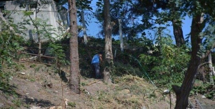 Tarım İl Müdürlüğü binası arkasında bulunan ağaçlar kesiliyor