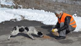 Sokaktaki hayvanlar için Türkiye'de bir ilk olarak 'Pati Parkı' yapıldı