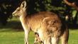 Eğlence için 20 kanguruyu öldürdüler