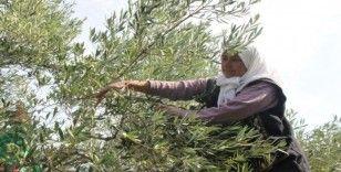 Zeytin ve zeytinyağı ihracatçıları kendileri ve üreticilere verilen desteklerin arttırılmasını istedi