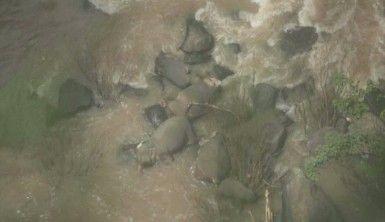 Taylan'da milli parkta 6 fil boğuldu