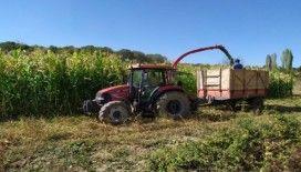 Pazarlar'da silajlık mısır hasadına başlandı