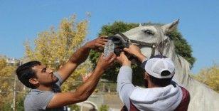 At çiftliğindeki yangında 1 milyon lira maddi hasar