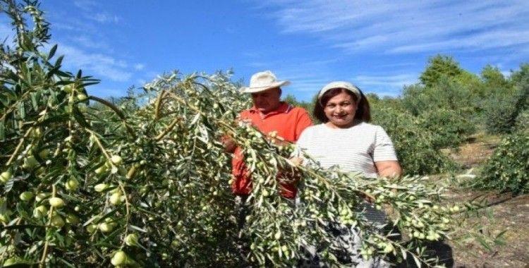 Antalyalı girişimci hibe ile sofralık zeytin fabrikası kurdu