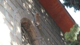 Ağaçta 4 gün mahsur kalan kediyi vatandaşlar kurtardı