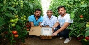 Canan Karatay'ın 'domates' eleştirilerine Kumlucalı üreticilerden sert tepki