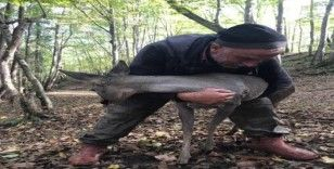 Vahşi hayvanlar parçalayacaktı, ziyaretçiler buldu