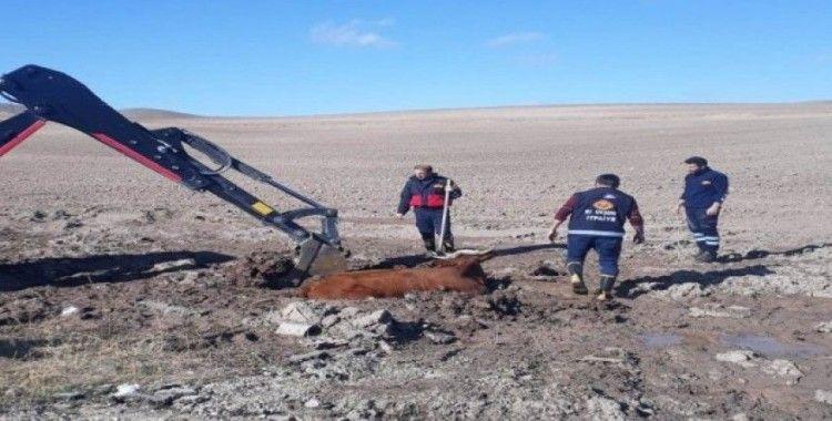 Özalp'ta inek kurtarma operasyonu