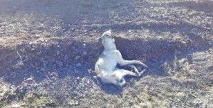 Kırsala bırakılan köpekler açlıktan öldü