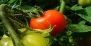 Bitkisel ürünler için sigorta zamanı