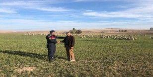 Çoban uyudu, kayıp olan koyun sürüsünü jandarma buldu