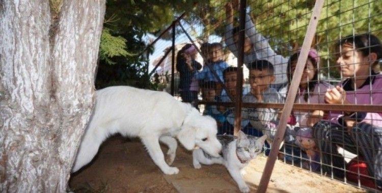 Kedi ve köpeğin dostluğu okulda pekişti
