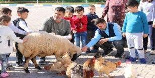 Anaokulu öğrencileri, okullarında tohum ekip evcil hayvan besliyor