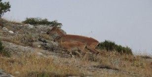 Usulsüz avlanılan av hayvanlarının etleri imha edildi