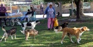 Sokak köpekleri 'Filiz anne'nin yolunu gözlüyor