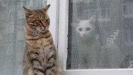 Soğuk havada aynı karede iki farklı yaşam