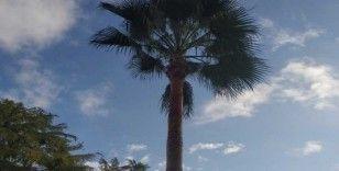 Palmiye ağacında mahsur kalan kedi kurtarıldı