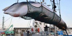 Japonya'dan ticari balina avı için yeni hamle