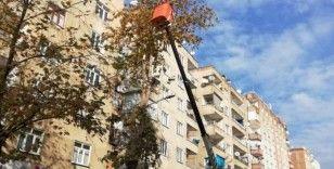 Bağlar Belediyesi'nden ağaç bakımı ve budama işlemleri özel çalışma