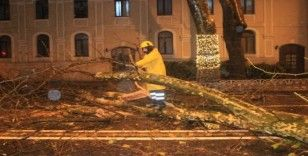 Beşiktaş Dolmabahçe'de yola devrilme tehlikesi bulunan ağaç kesildi