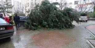 Kartal'da devrilen ağaç iki aracın üzerine düştü
