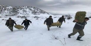 Karaman'da yaban hayvanlarına yem desteği