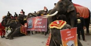 Filler ve öğrenciler Avustralya'da ölen hayvanlar için yürüdü