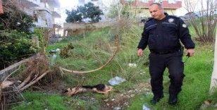 'İnsanlara zarar verse daha mı iyi olacak' deyip, köpeği bıçaklayarak öldürdü